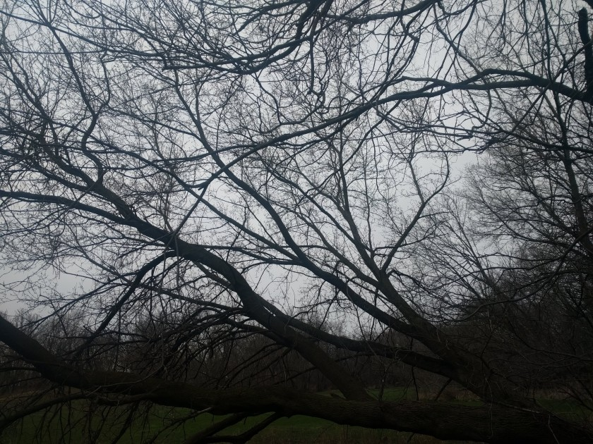 sky branches